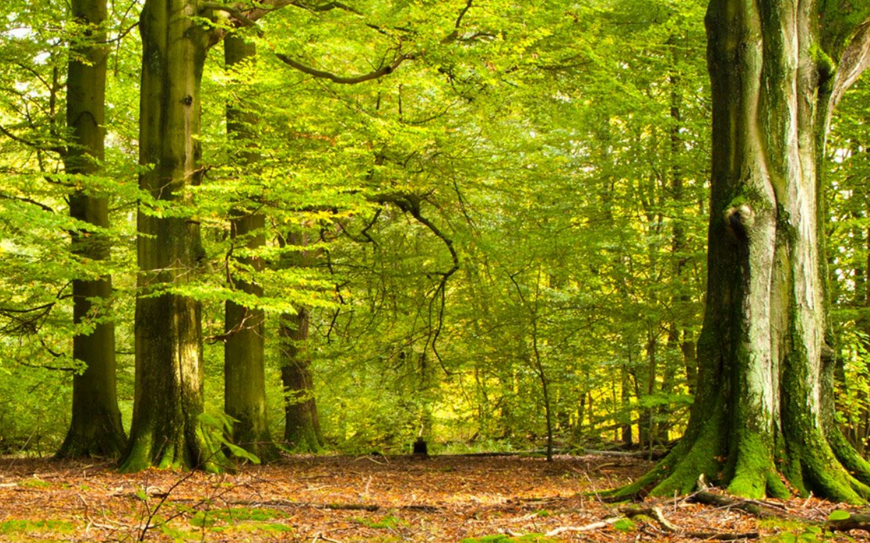 Computer background: Trees