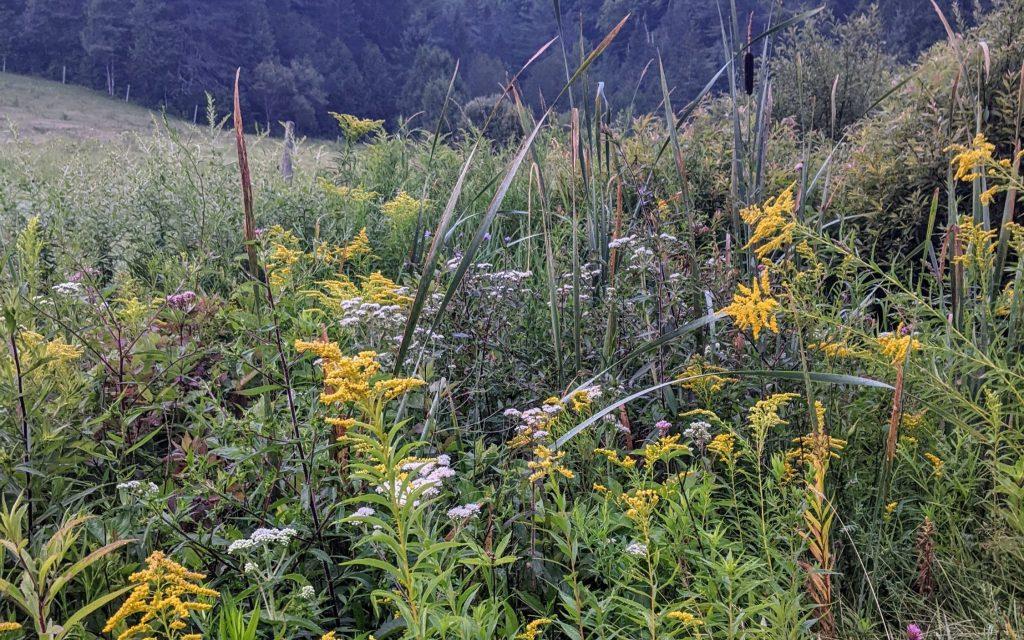 Wildflowers near field