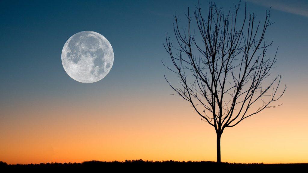 Full Moon and Tree, Harvest Moon